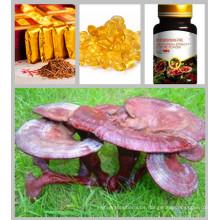 CAS: 57-87-4 Ganoderma Lucidum (Leyss.ex Fr.) Karst Reishi Pilz Extrakt