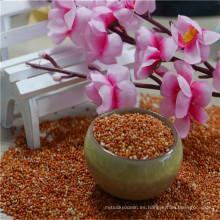 La exportación de crecimiento natural mijo mijo grano de semilla de mijo rojo de china