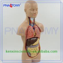 Venta caliente venta completa modelos de torso de anatomía de PVC
