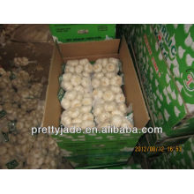 high quality china garlic