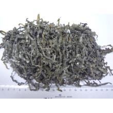 Kelp de mer coupé séché au soleil (algues, kombu, laminaria)