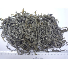 Sol Secas Cut alga marinha (algas marinhas, kombu, Laminaria)