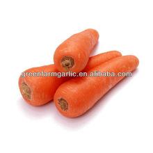 Fresh zanahorias para la venta