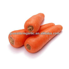 fresh carrots for sale