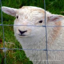 Clôture de mouton et de chèvre galvanisée à chaud
