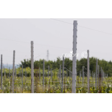 Sistema Wine Grape Trellis