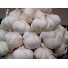 New Crop Fresh Pure White Garlic 5cm 5.5cm for Southeast As