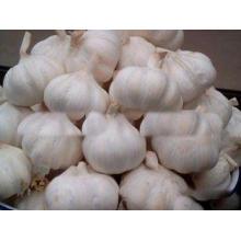 New Crop Fresh Pure White Garlic 5cm 5.5cm for Southeast As