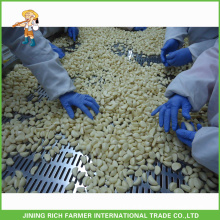 Naturally High Quality Chinese Fresh Peeled Garlic Processing