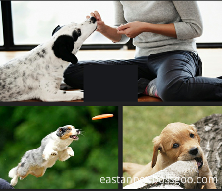 pet treats Eastan Dog treat