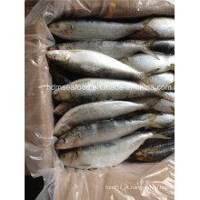 Toda a especificação grande rodada de peixes congelados de sardinha para o mercado