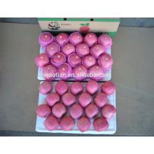 Apple fruit fresh fully blush big sizes