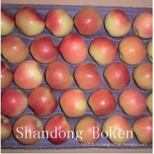 2015 Новое свежее гала-яблоко