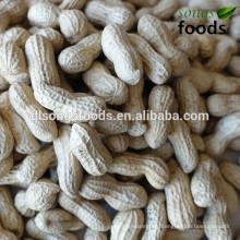 Peanut price per kg lead