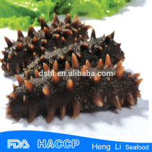 Sea Cucumber available at good prices for export vacuum package
