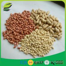 2016 nova colheita de amendoim amassada 25/29 e 41/51