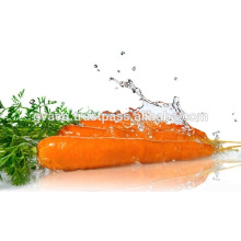 FRESH RED CARROT EXPORTER PRICES 250G AND UP 2017