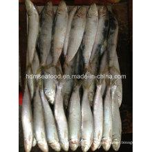 Свежая W / R Замороженная рыба сардин для наживки