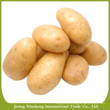 Wholesale bulk potato specifications