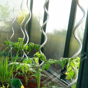 Spiral Support Wire Tomato Stakes For Garden