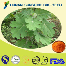 Natural Antibiotic Macleaya Cordata Extract 15%-98% Sanguinarine HPLC