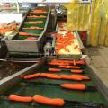 Фабрика Прямые Поставки Свежей Моркови