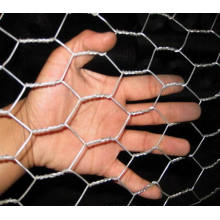 Galvanized Hexagonal Wire Mesh/PVC Coated Hexagonal Wire Netting