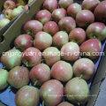 Red Star Apple com tamanho 138/150/163/175/198