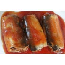 Konservierte Sardine mit unterschiedlichem Geschmack (HACCP, ISO, BRC, FDA)