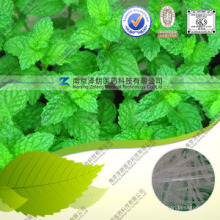 99% Purity White Crystal Menthol