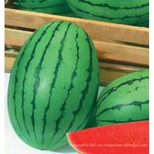 HW22 Gamju pequeñas semillas de sandía híbridas F1 ovales verdes en semillas de hortalizas