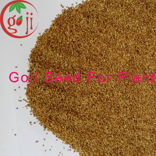 Goji berry seeds for plant