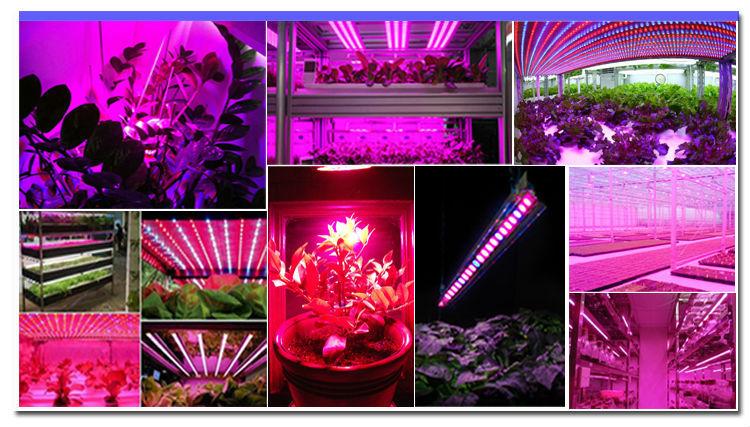 LED Vegetation Lights