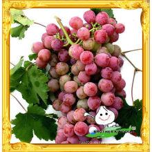 Vender 2012 nuevo cultivo de uva