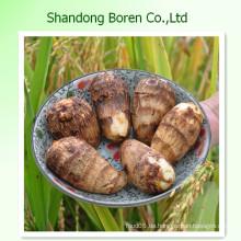 Heißer Verkauf frischer Taro von Shandong