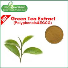 Yeşil çay özü EGCG