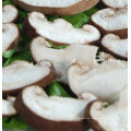 Cheap Price Smooth Mushroom