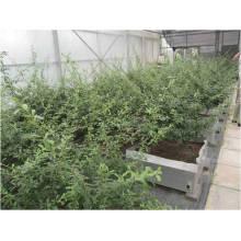 Materiais Waterpoofing modificados excelentes da resistência do telhado do betume para o jardim de telhado de China