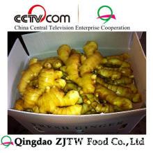 Wholesale Ginger Price Ginger for International Ginger Buyer