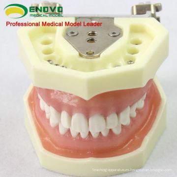 DENTAL04 (12563) Modelo de modelo anatómico Modelos de estudio dental con goma blanda