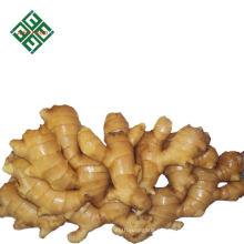 prix du marché de gingembre noir avec le fournisseur de la chaîne