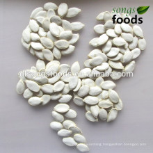 Chinese Snow White Pumpkin Seeds,Chinese Vegetable Seeds