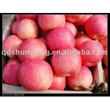 Chinesischer Shandong fuji Apfel