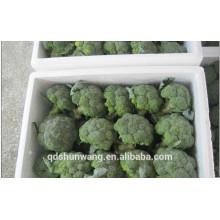 Китайская свежая брокколи