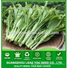 Sementes NPK22 Guoqu pak choi para a agricultura, sementes de hortaliças companhia