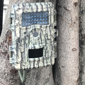 BG-523 Bark Strike force Hunting Camera