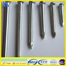 Galvanized Building Nails From Factory (XA-CN002)