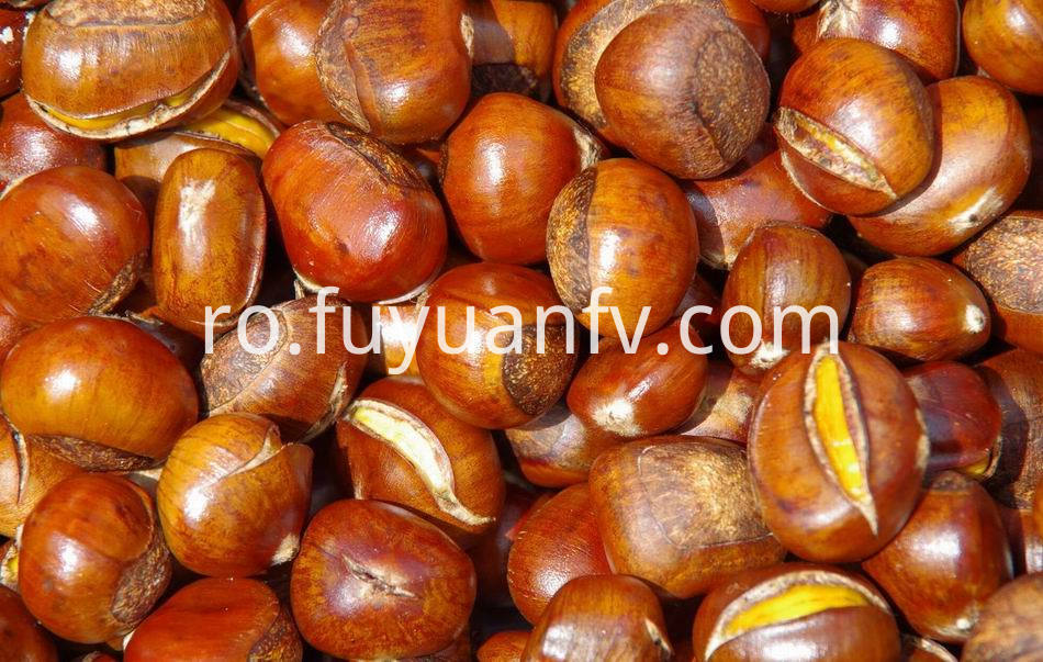 Fresh Chestnut 4