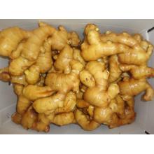 200 g et plus de qualité supérieure de gingembre frais