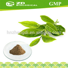 Plant extract 100% natural green tea leaf extract powder